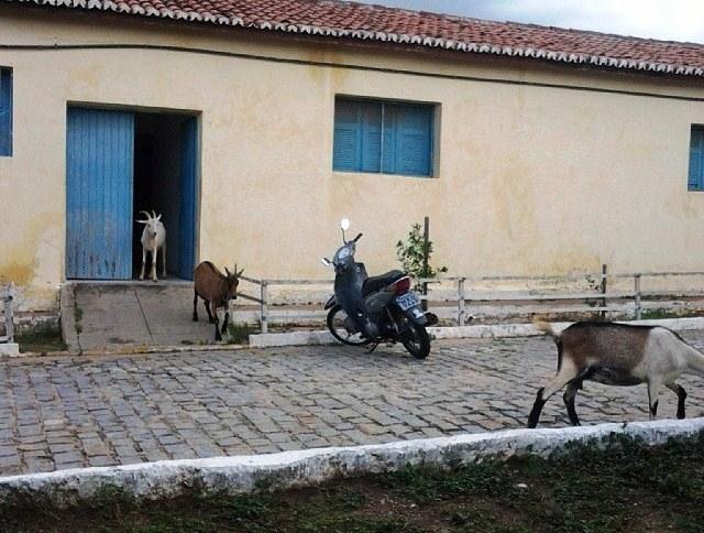Os animais são frequentadores assíduos da UFRN Currais Novos.