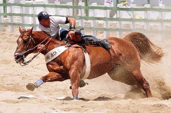 Cavalo Holland Jeck vem sendo o centro das atenções na vaquejada de Caicó.
