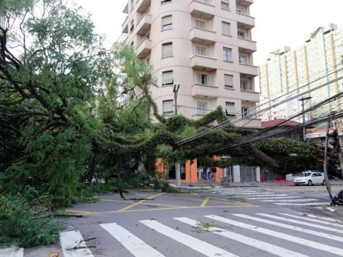 Uma árvore caída na esquina das ruas Eça de Queiroz e Cubatão, na Vila Mariana (Foto: Nelson Antoine/ Estadão Conteúdo).