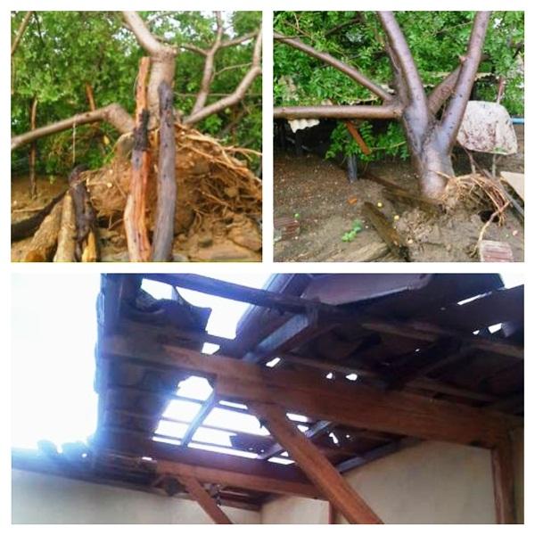 Os fortes ventos arrancaram árvores destelharam casas.