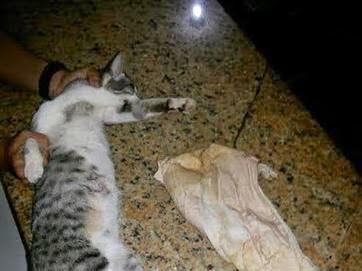 Celulares, chips e drogas eram transportados pelo gato.