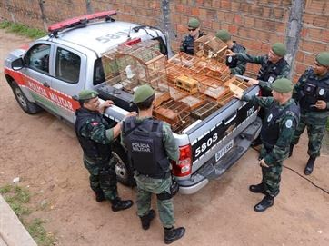 Na Paraíba, animais usados em rinhas de briga são resgatados e polícia prende 21 suspeitos