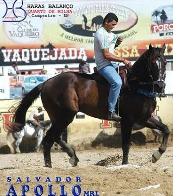 """PEGADAS DE OURO: Cavalo do """"Haras Balanço"""" de Campestre é leiloado por quase meio milhão de reais"""