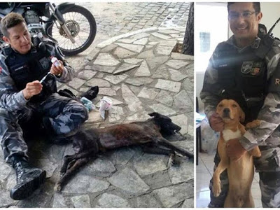 Patrian Junior recolhe animais na rua, dá abrigo, alimentação e medicação.