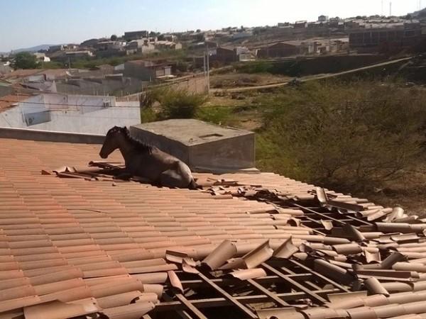 INUSITADO: Cavalo cai em telhado de casa e é retirado por guindaste na PB
