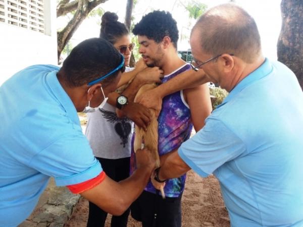 Saúde vacina mais de 37 mil animais e realizará novo Dia D da Campanha Contra Raiva em Natal