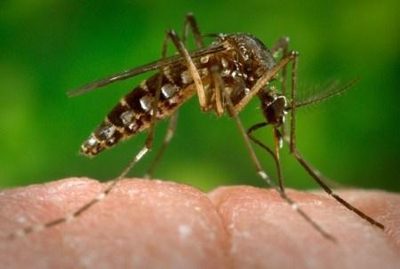 Além da microcefalia, zika vírus pode transmitir doença rara em adultos