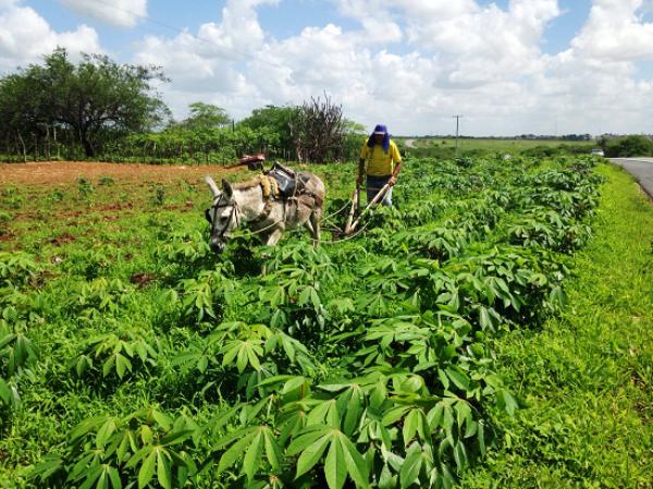 Chuvas trazem esperança e agricultores iniciam plantio