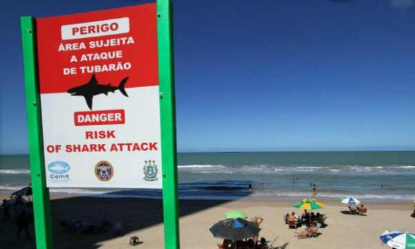 Número de ataques de tubarão no mundo registra recorde em 2015