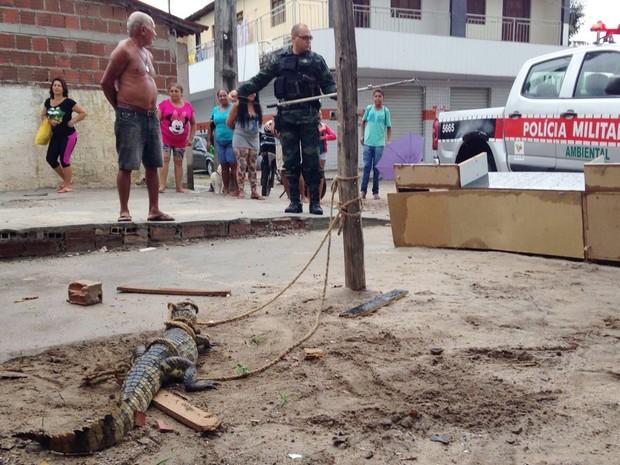 Jacaré foi encontrado por comerciante em João Pessoa na madrugada de ontem (23).