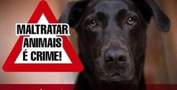 Defensores dos animais querem punição para aposentado que matou quatro cães, em Caicó
