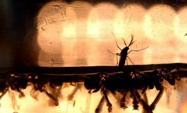 Saúde confirma 5,4% dos casos notificados de dengue no RN