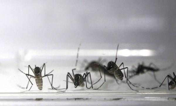 Vacina contra a dengue em teste imuniza 100% dos voluntários