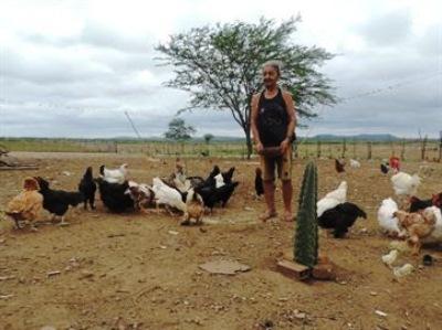 Paraibana cria aves usando alimento e remédios naturais e vende 960 ovos por mês