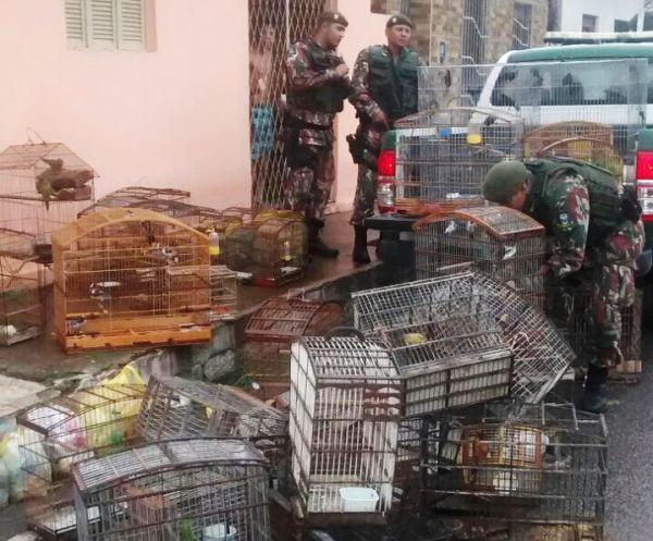 CIPAM resgata cerca de 90 pássaros silvestres na Grande Natal