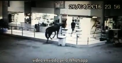 """""""ZORRO DO MAU"""": Na Paraíba, homem entra em loja com cavalo para fazer assalto"""