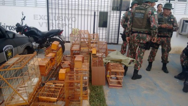 Polícia Ambiental faz apreensão de pássaros em Parelhas