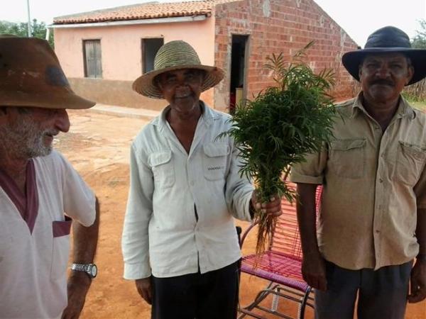 Agricultores informaram que o chá vem sendo procuradas por pessoas infectadas da região.