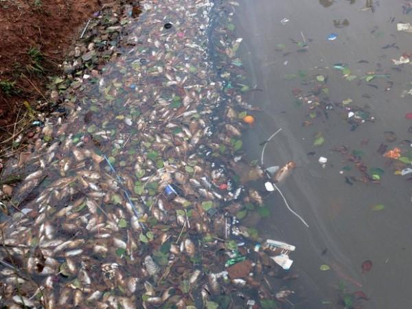 Peixes foram retirados de lago na divisa entre Oeste de SC e Argentina (Foto: Portal Tri/Divulgação)