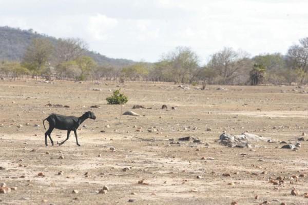 Governo do RN ganha prêmio internacional com projeto piloto de desertificação