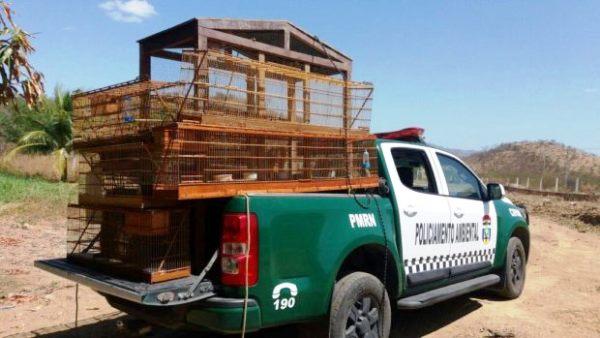 JUCURUTU: Após denúncia, Polícia ambiental faz grande apreensão de animais silvestres e gaiolas