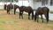 Após fraude em leilões, Polícia Civil de João Pessoa apreende cavalos avaliados em R$ 400 mil
