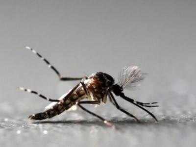 Outros 144 óbitos ainda estão sob investigação. No RN, 78% dos municípios têm infestação do mosquito Aedes aegypti.