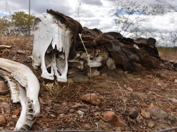 Secretaria de Defesa Civil reconheceu emergência por causa da seca. Em setembro, Governo do RN renovou decreto pela 7ª vez consecutiva.