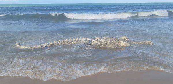 Carcaça de animal com mais de 7 metros é encontrado em praia do RN