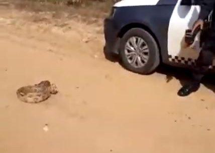 RN: Policial militar atira em cobra e responderá a inquérito
